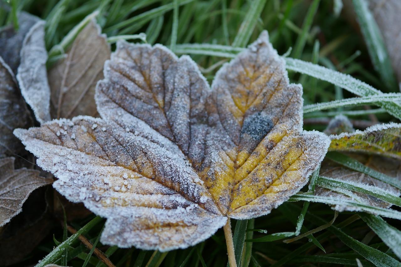 frosty-1873512_1280